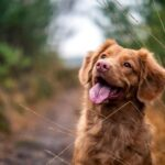 6 Activities To Practice To Make Your Pet Dog Active And Energetic